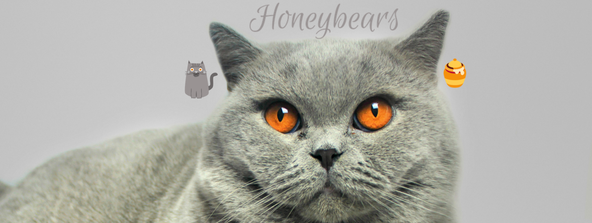 honeybears_merlin_banner