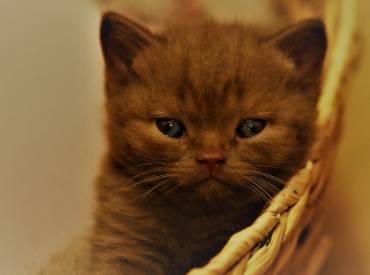 Wir erwarten Kitten!