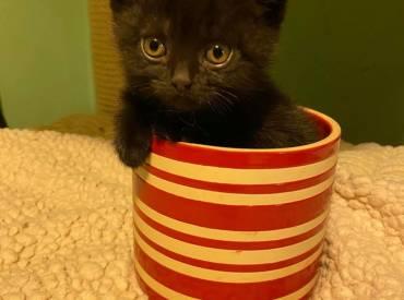 Unsere G-Kitten suchen ein neues Zuhause