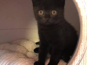 Kitten suchen ein neues Zuhause