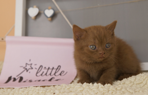 Alle Kitten sind reserviert